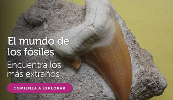 Fósiles en todocoleccion
